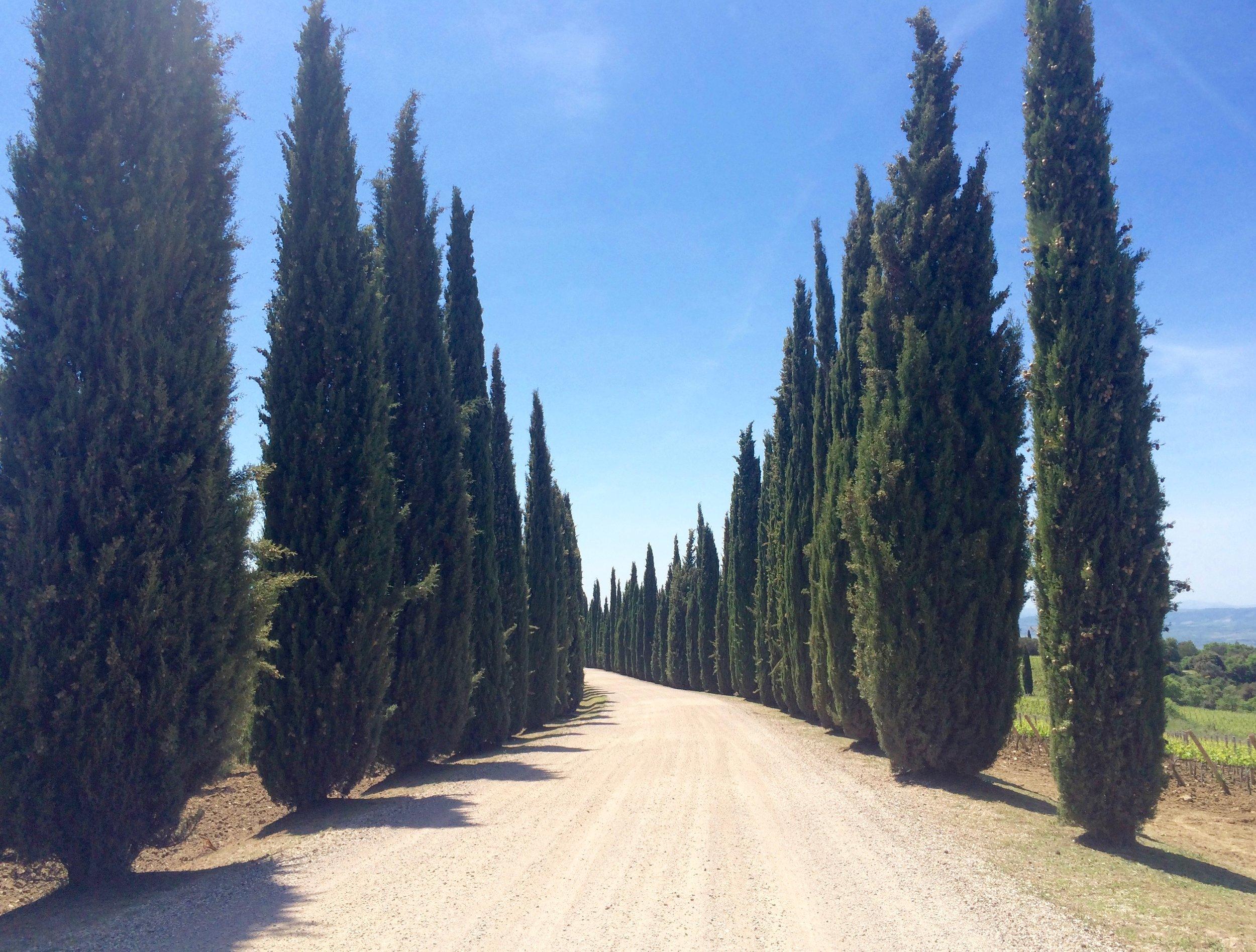 ladolcevigna_tuscany_bike_2.jpg