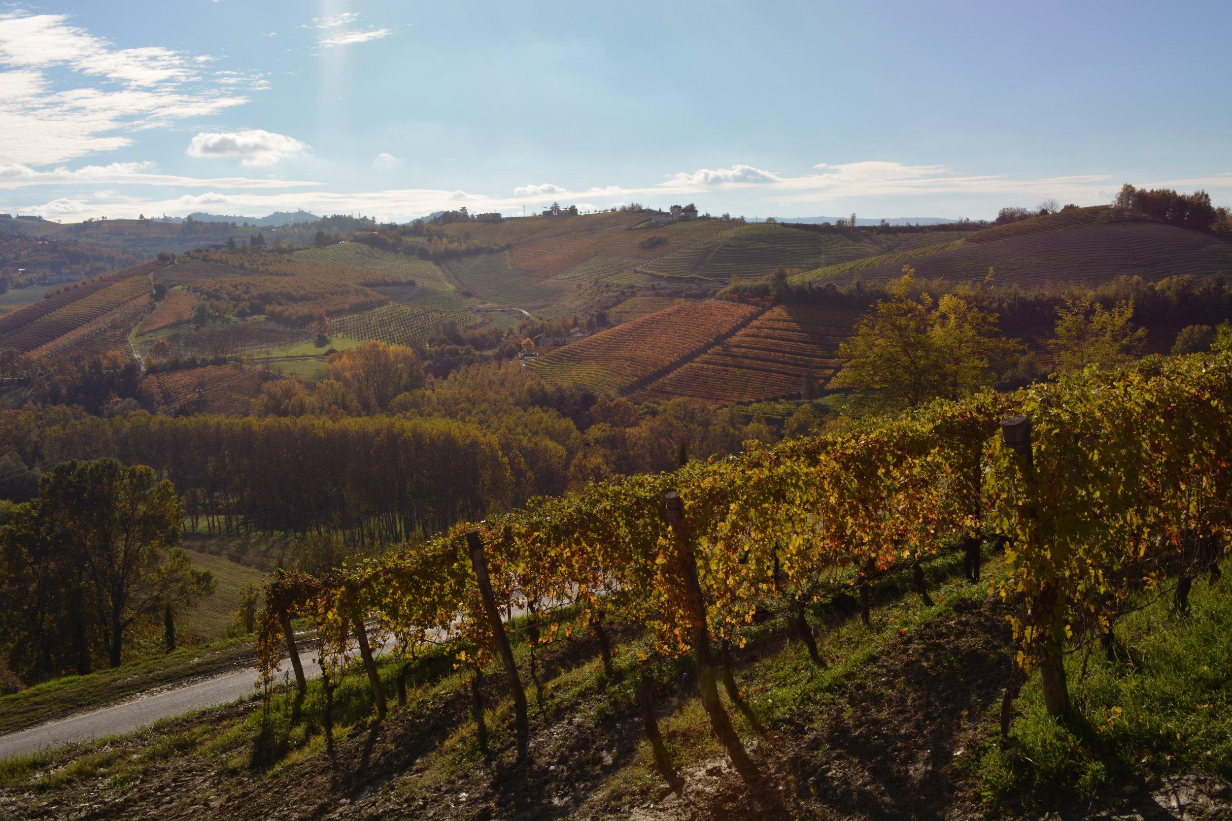 Copy of Best Piemonte Wine Tour - Piemonte Vineyards