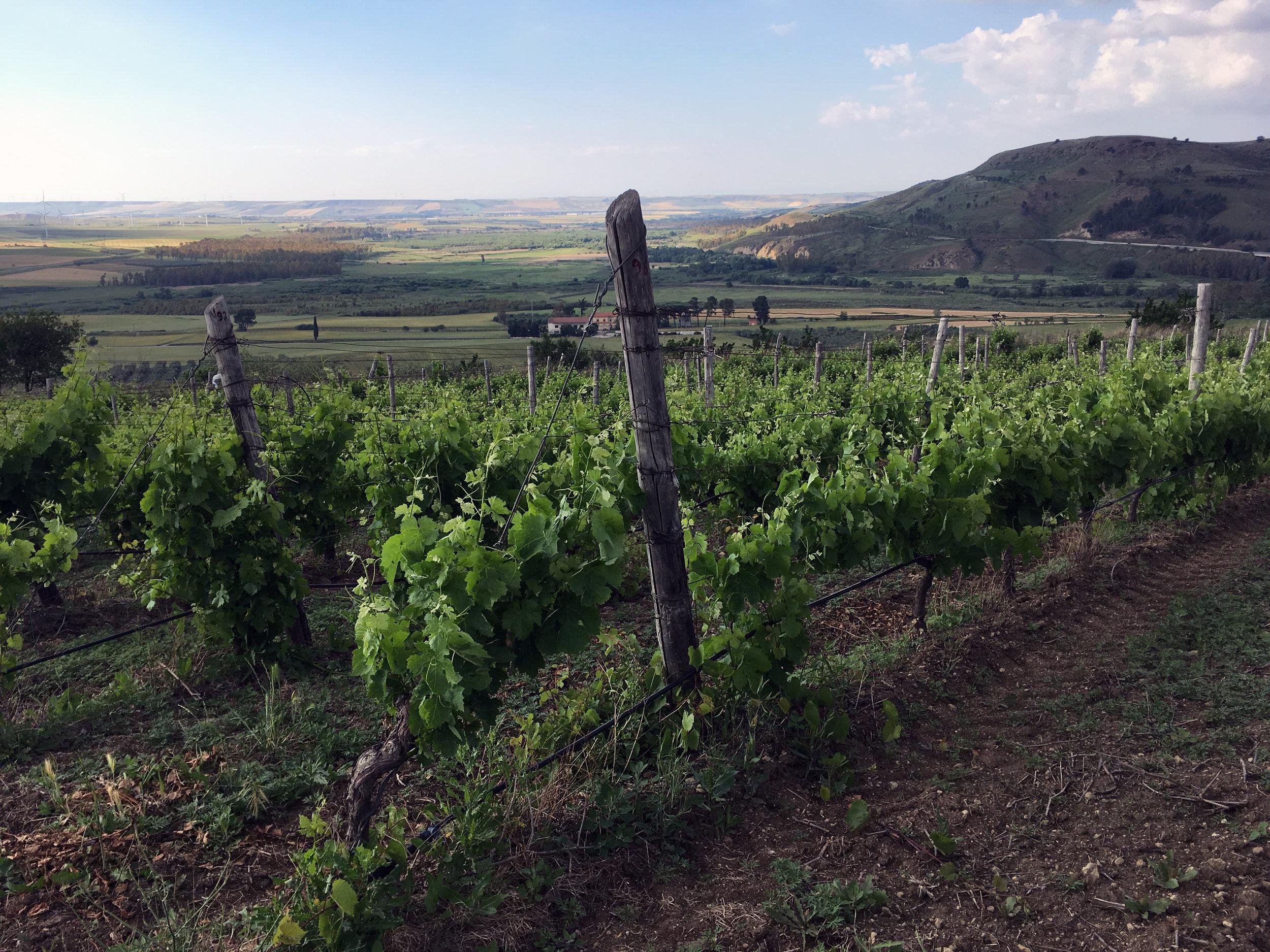 La Dolce Vigna_Puglia Basilicata Wine Tour_Aglianico del Vulture