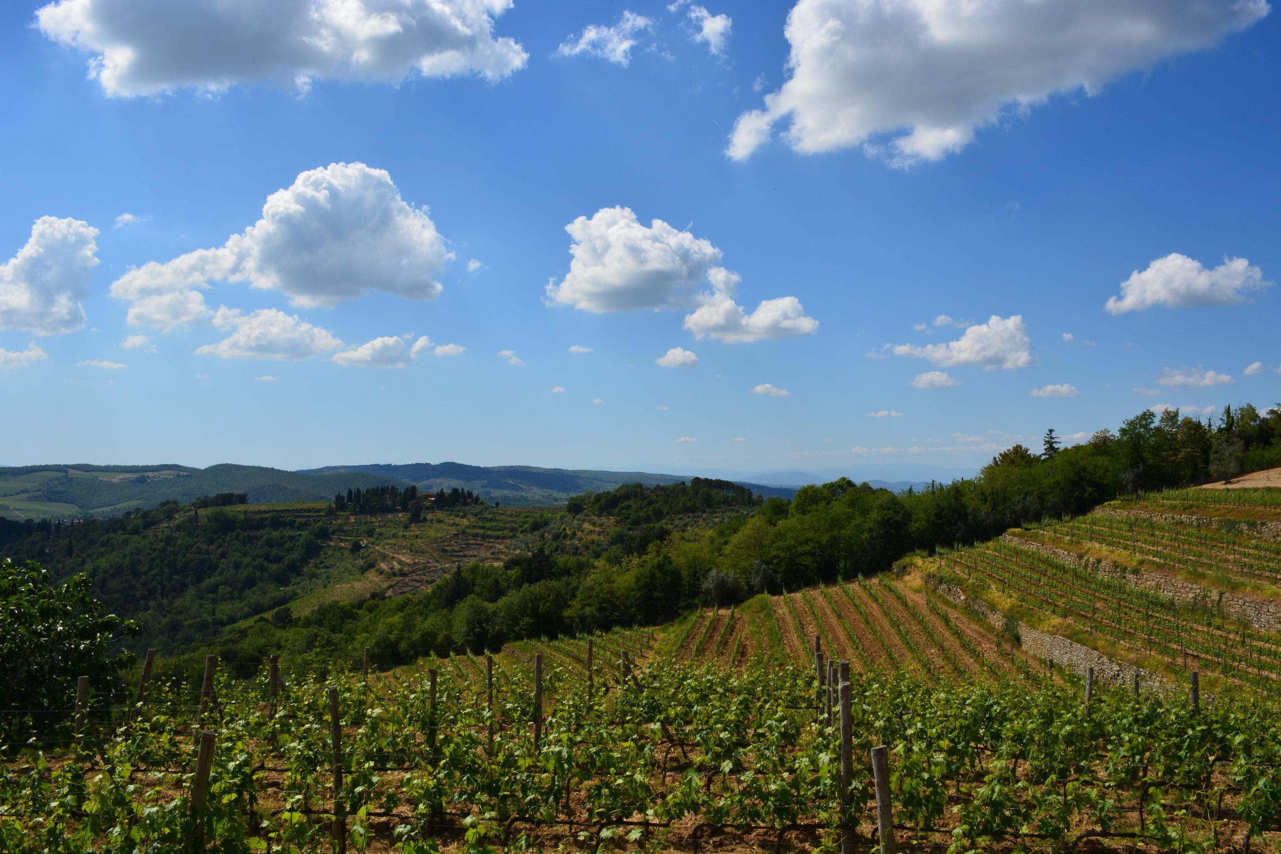 Tuscany Yoga Retreat - Tuscan Vineyards - La Dolce Vigna  Wine Tours