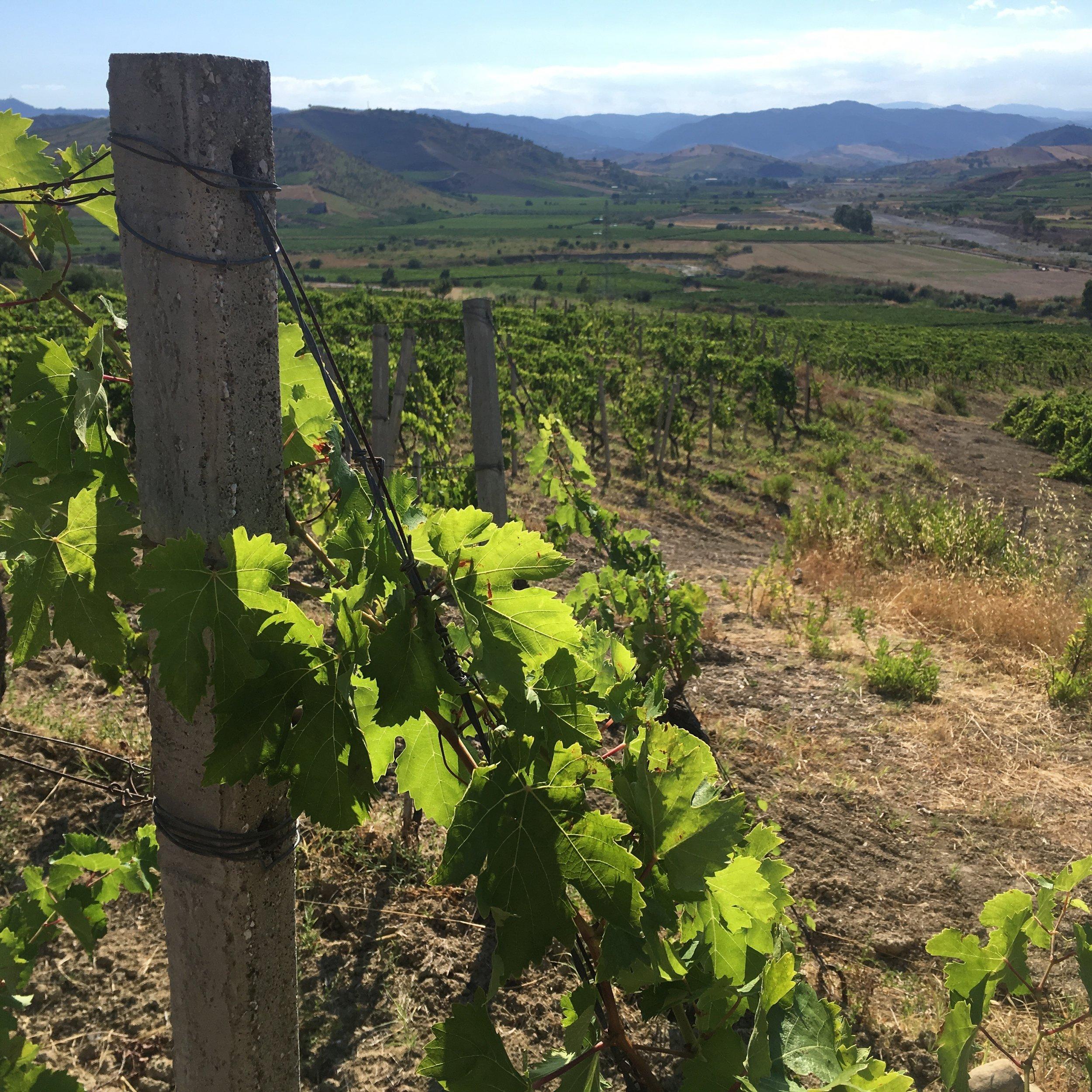 Calabria-Sicily_Wine Tour_7.jpg