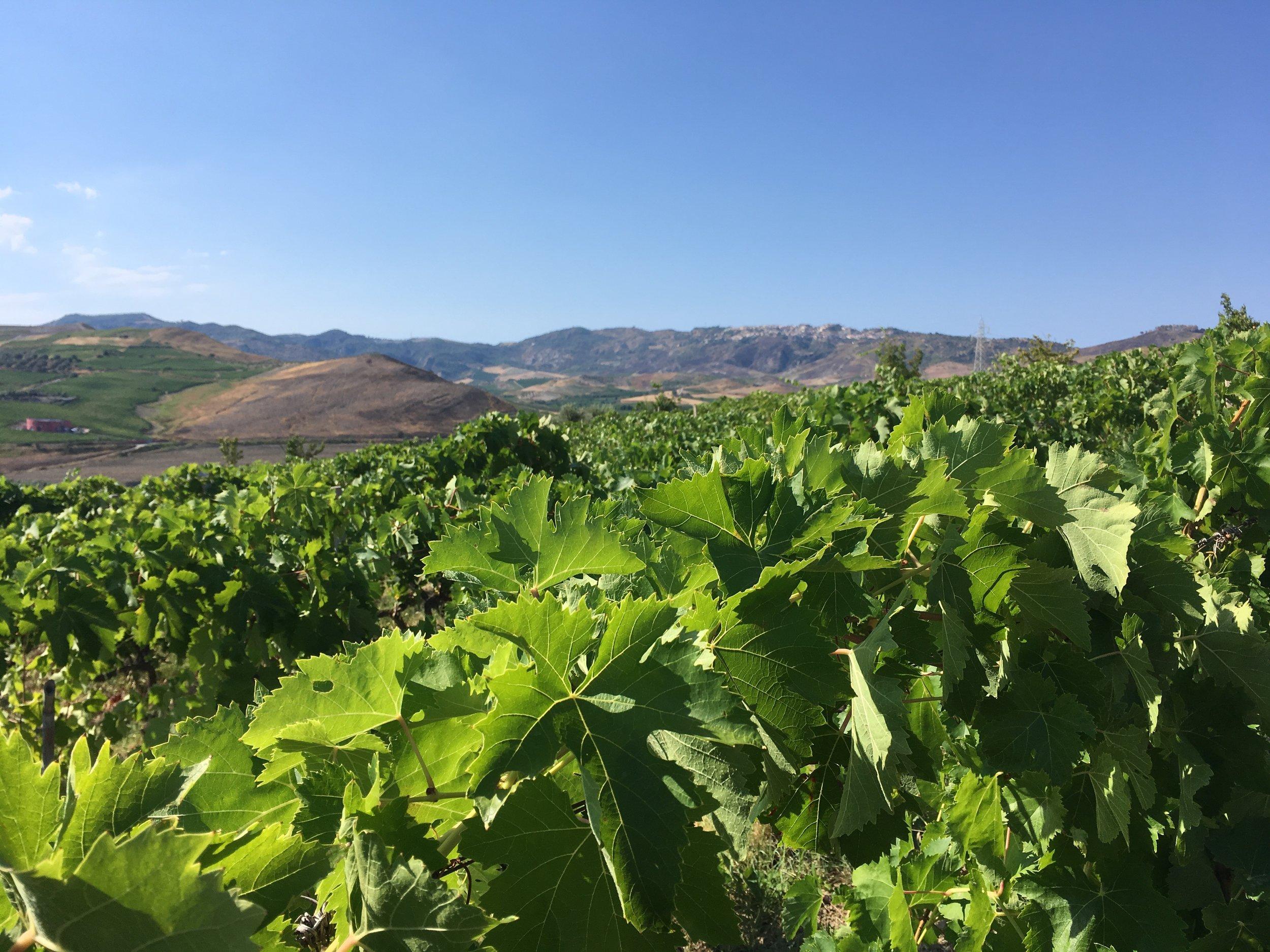 Calabria-Sicily_Wine Tour_8.jpg