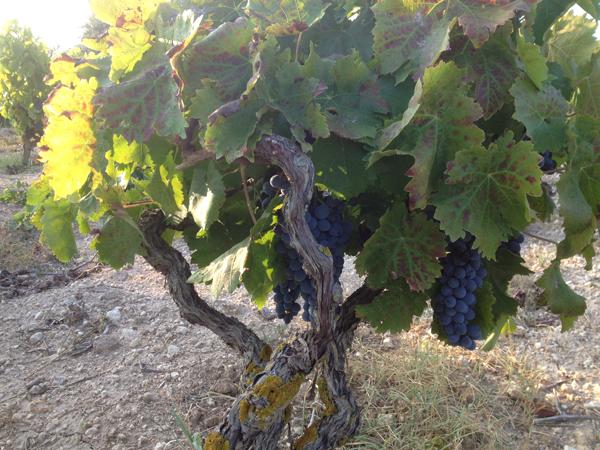 Mortellito - Sicily - Winery - 2.jpg