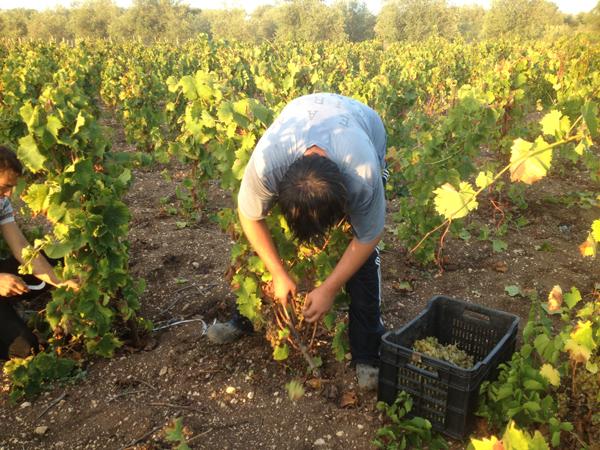 Mortellito - Sicily - Winery - 3.jpg