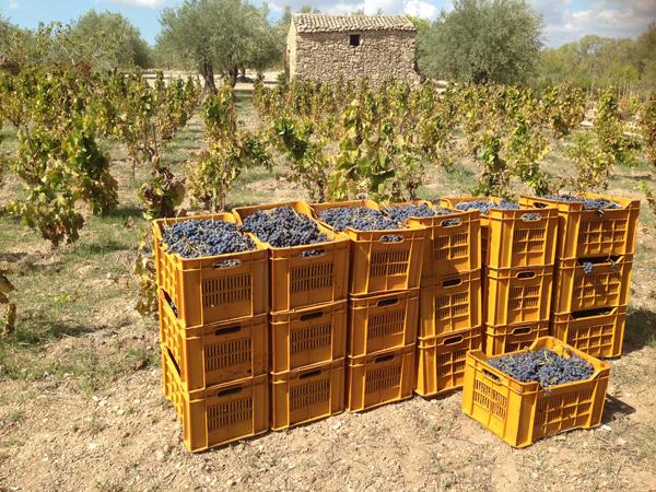Mortellito - SIcily - Winery.jpg