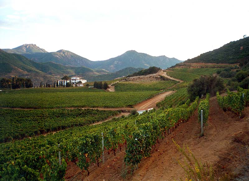 cardedu_cannonau_vineyards.jpg