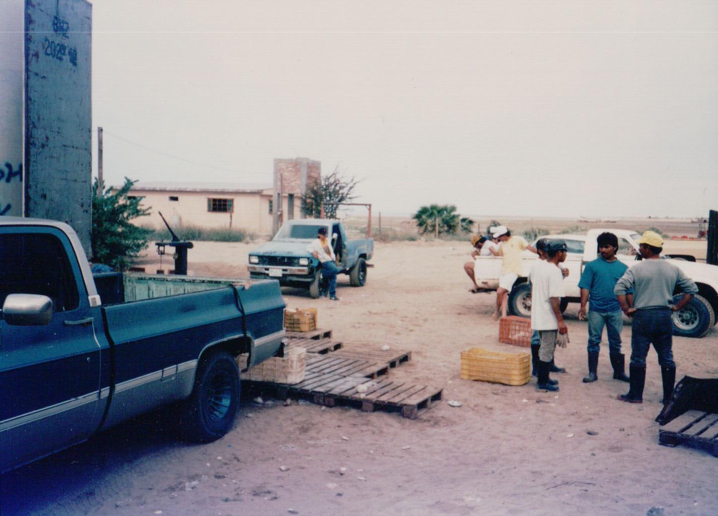 Commercial fish buyers, El Golfo de Santa Clara, Sonora, Mexico