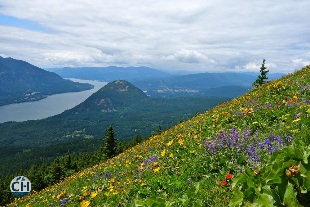 Flowers Hillside River
