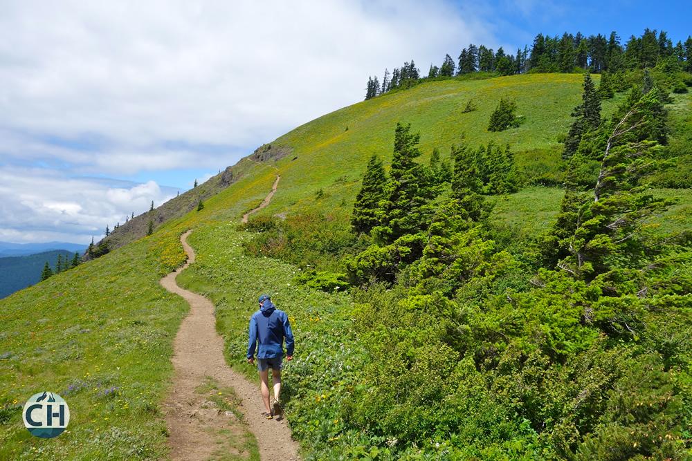 JC Hiking Dog Mt.