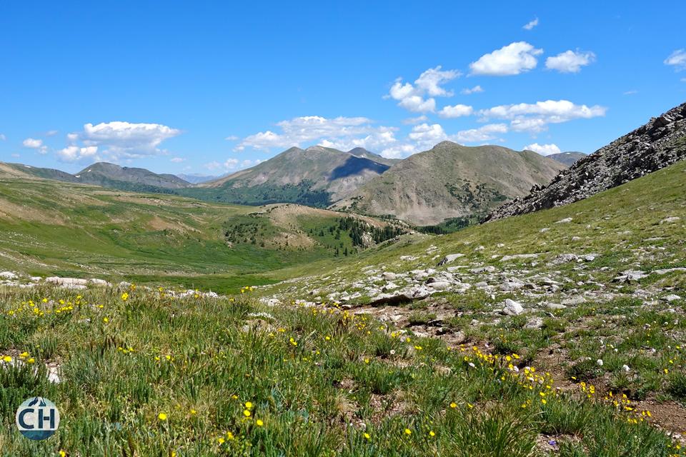 flowers, fields, mountains