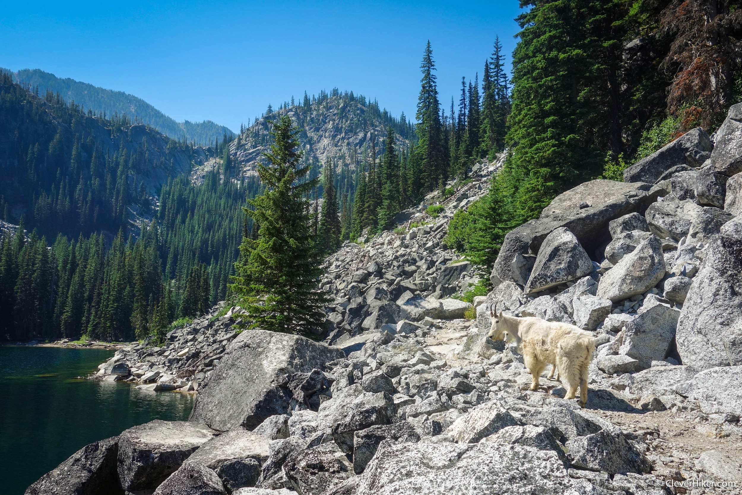 Goat on the trail at lower Snow Lake
