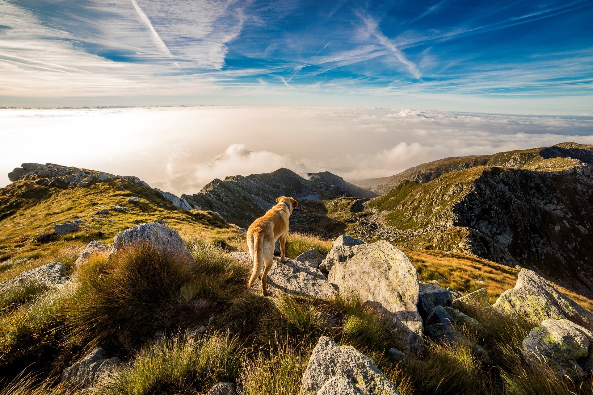 adventure-clouds-dog-65867.jpg