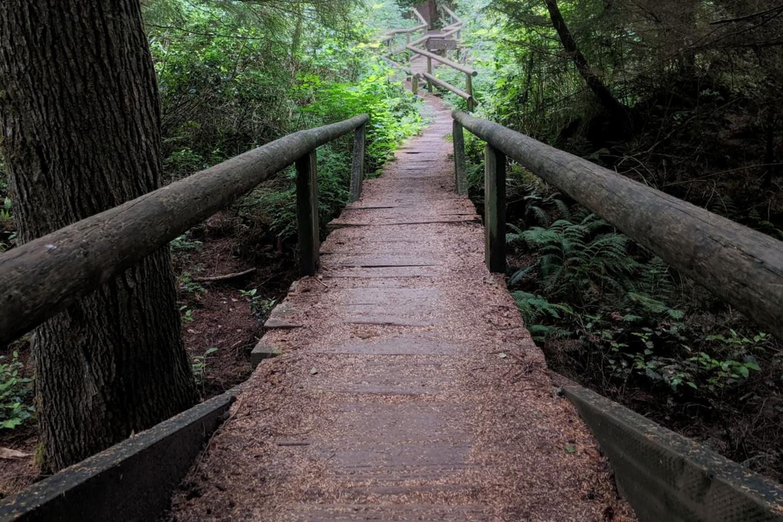How the trail starts.jpg