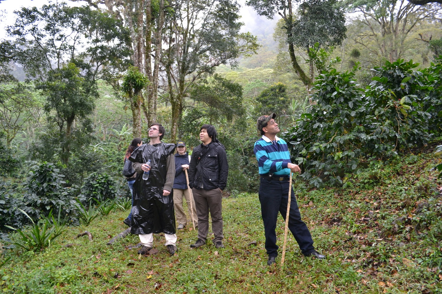 Hiking trip and tour to learn about the cloud forest of Santa Maria de Ostuma.