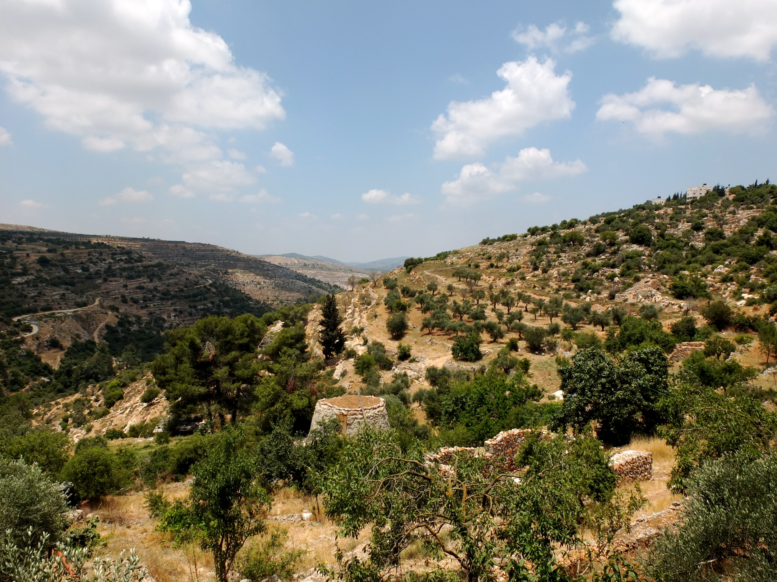 On my second day in the Bethlehem area, I visited the nearby town of Beit Jala,     home to an organic farm and restaurant called Hosh Jasmin. This is the view from     the farmhouse's porch-like enclosure, where I nursed a Taybeh beer—produced at     the first microbrewery in the Middle East, outside Ramallah—while awaiting what     turned out to be an incredible lunch. Owner Mazen Saadeh and his crew produce all     the restaurant's superb olive oil from these olive trees spreading out into the valley,     and harvest fruit and nuts from the many apricot, almond, and fig trees.