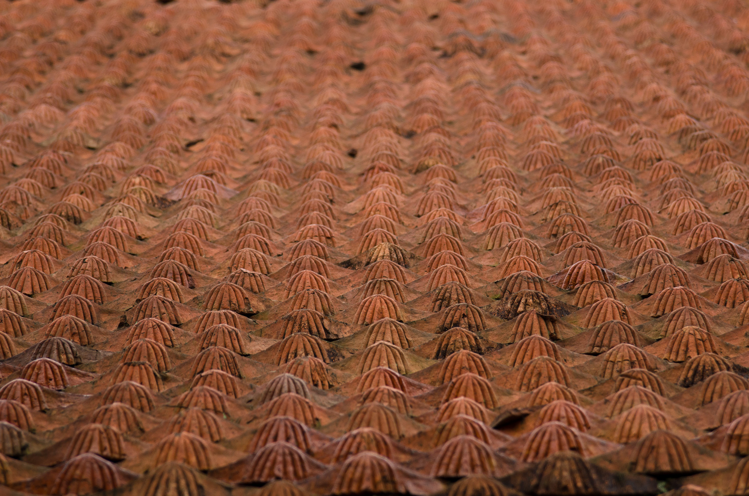 hanoi-temple-of-literature-roof-tiles.jpg