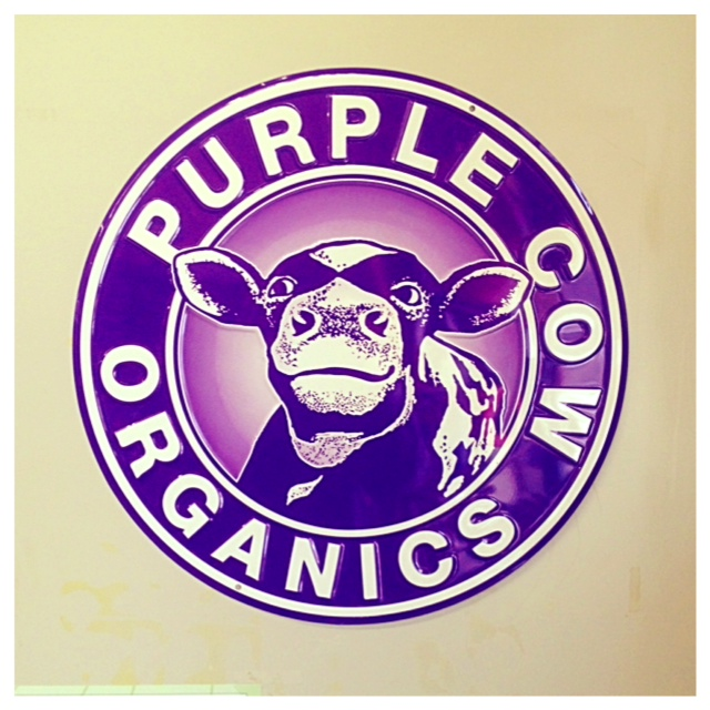 MS Store Purple Cow.jpg