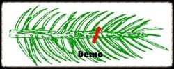 Spruce Pruning Demo.jpg