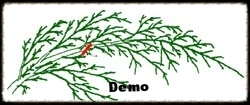 Arborvitae Pruning Demo.jpg
