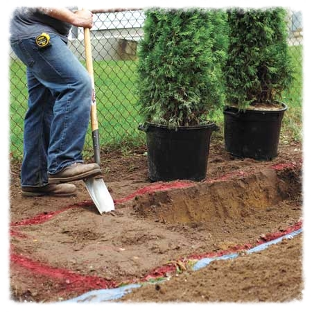 Fall Planting of Evergreens