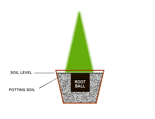 Planting-Diagram-Container-evergreen-Shrub.jpg