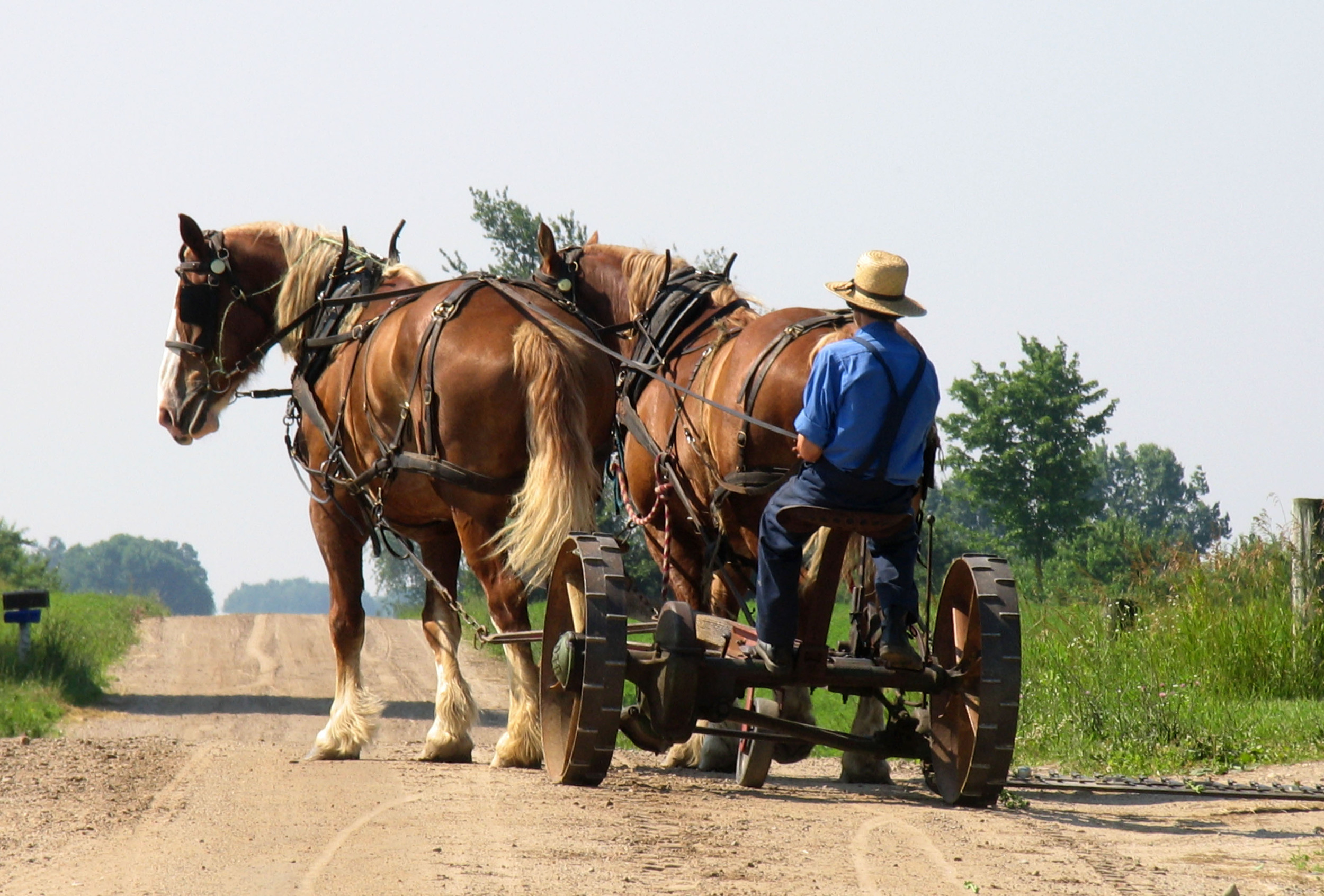 amish-wagon.jpg