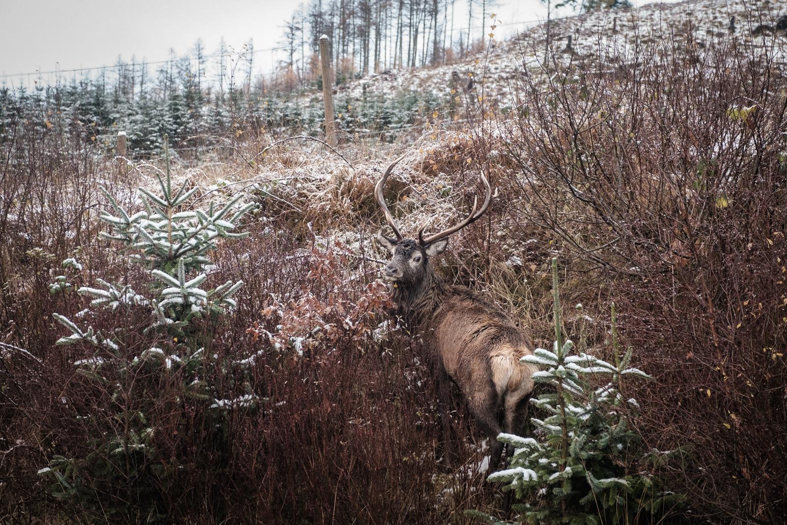 scottish highlands-17.jpg
