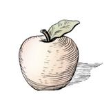 apple engraving.jpg