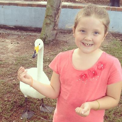 Feeding a Goose at Lake Eola