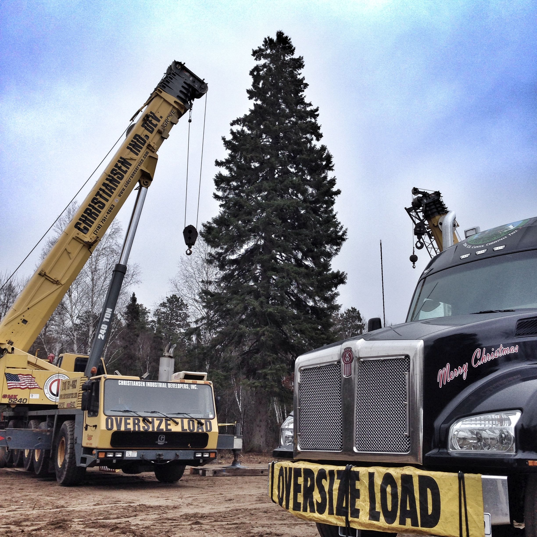 US Capitol Christmas Tree prep day