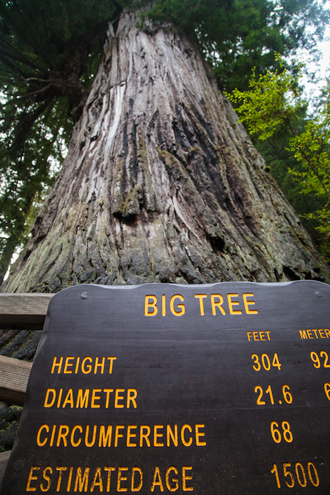 There are a handful of named, noticeable trees, including Big Tree.