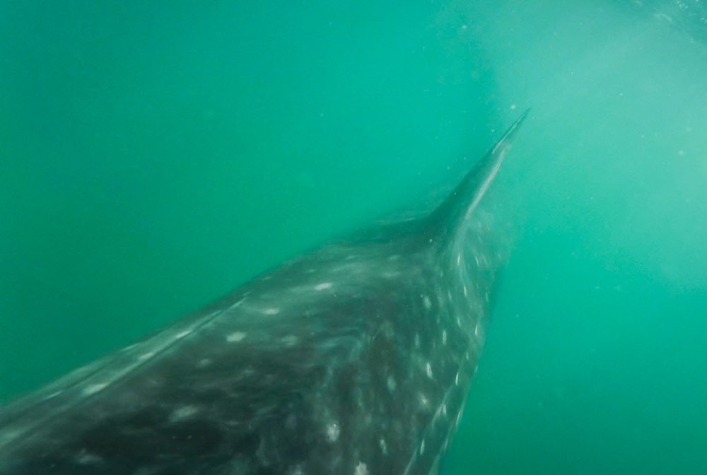 The moment I put my head and GoPro back underwater, I was greeted with a close encounter!
