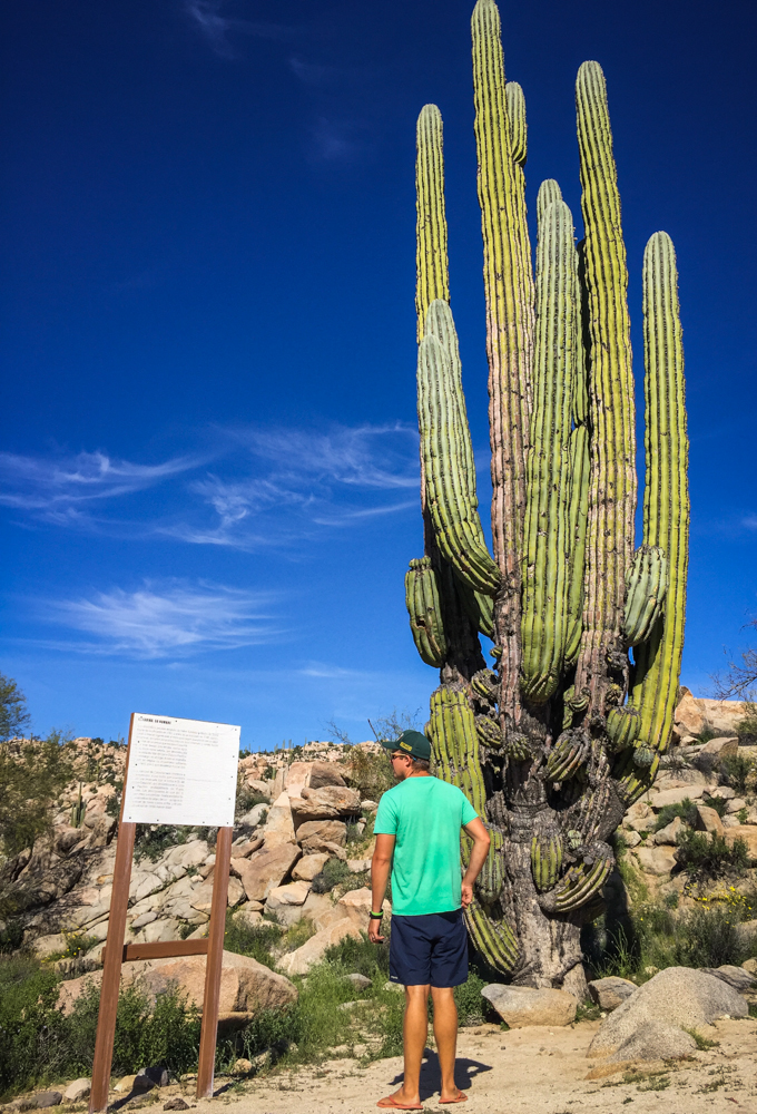 Signs and cactus at our rest stop walking trail.