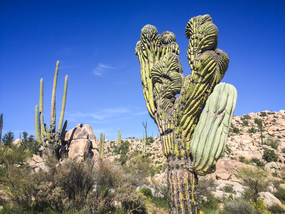 Some of the cacti were crazy!