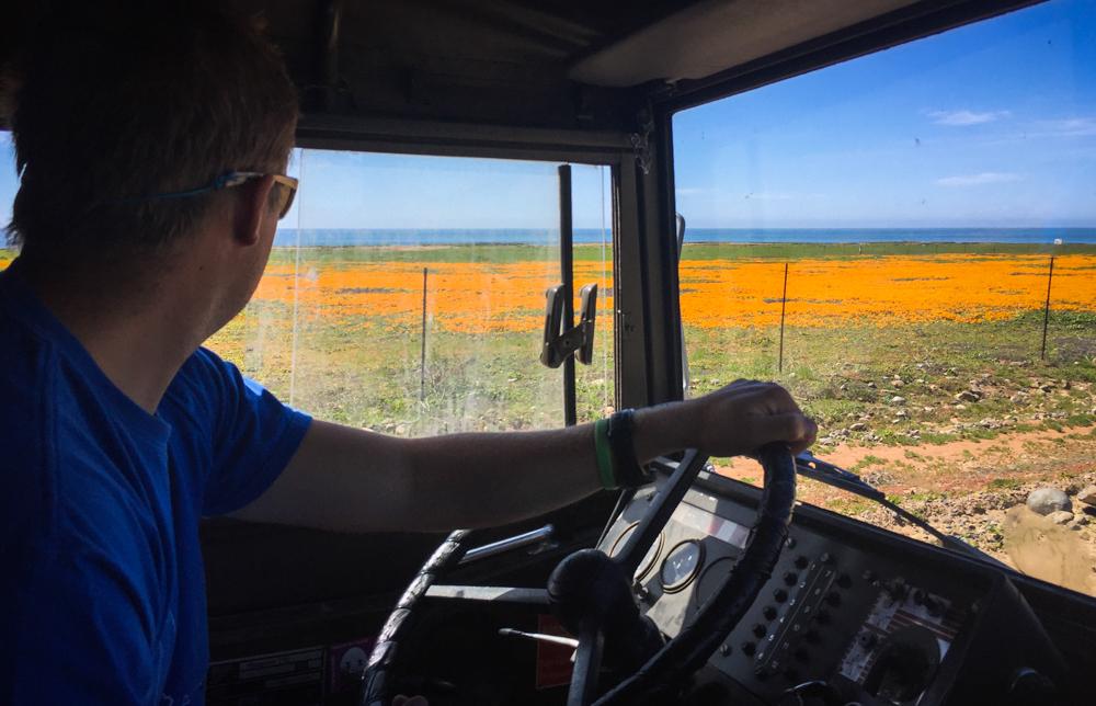 Fields of orange flowers along the coastal dirt road.