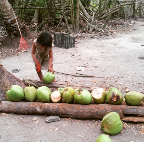 Seven year old using a machete to cut up my coconut. Casual.