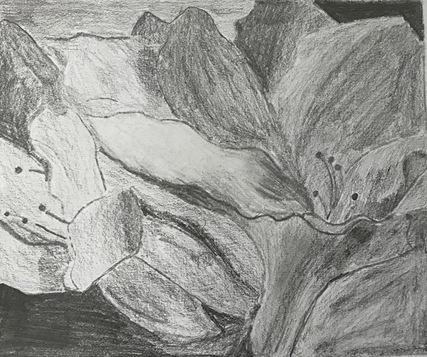 Lavanya has used black and white value patterns in pencil to create a beautiful study of a flower from life.