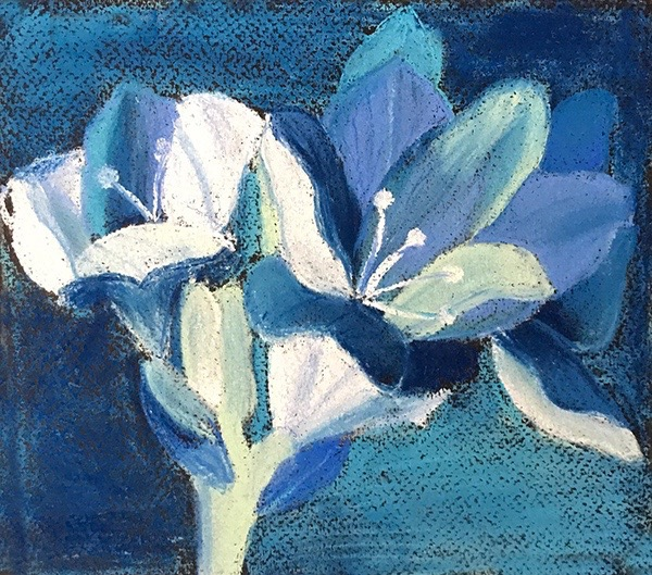 Ojasi has used good contrast of lights and darks to create a bold, almost abstracted image of a flower in pastel.