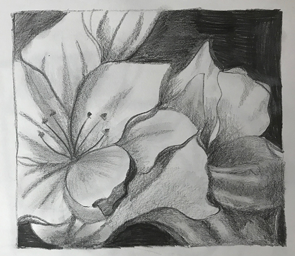 Prisha has created a beautiful pencil drawing through the use of good shading and her own personal style.