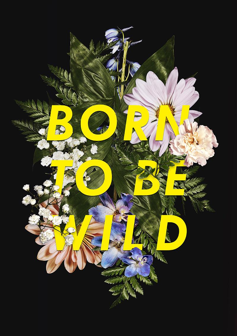 Born To Be Wild Wild II - Art Print