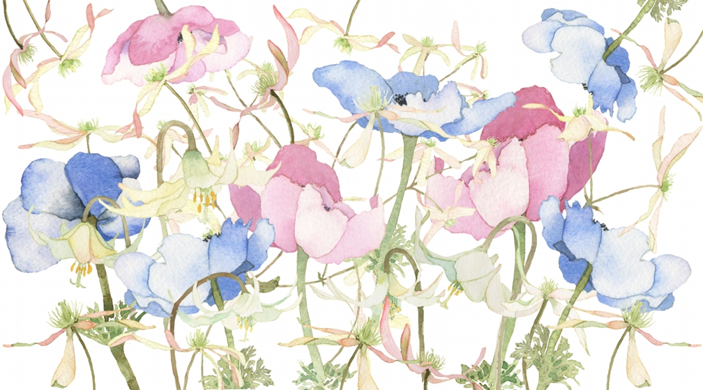 eatsleepdraw :     In Bloom