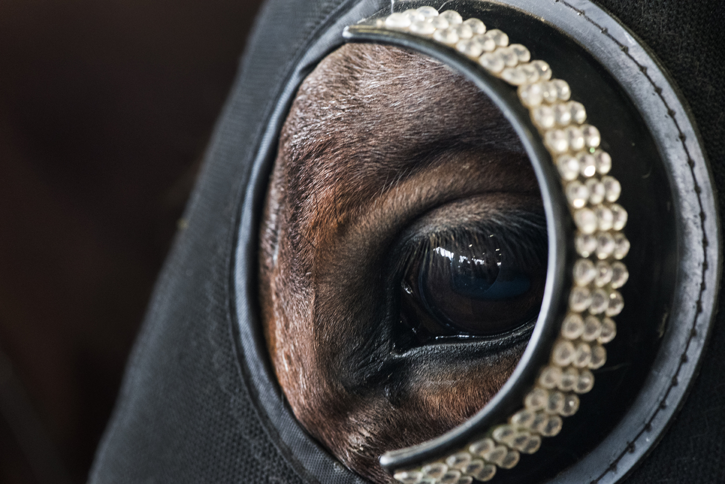 Skittish horses wear blinders and ear plugs to help keep them calm around the excitement and gunfire.