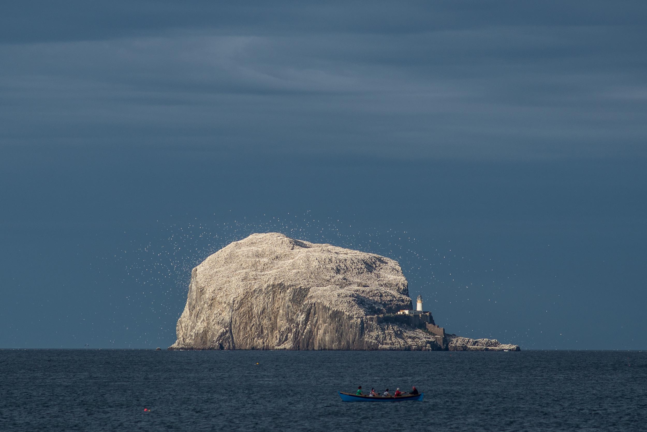 Bass Rock, North Berwick, Scotland. 2015