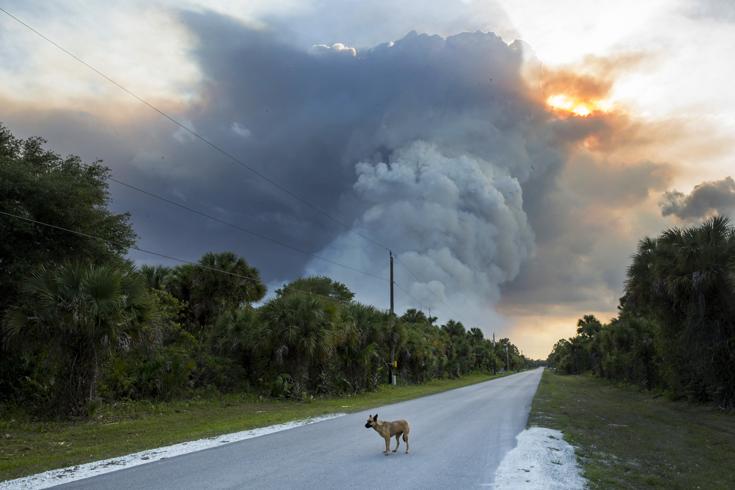 A brush fire burns near Frangipani Avenue in Naples on Thursday, April 20, 2017. Over the course of four days, the blaze scorched a total of 7,500 acres, injured one person and damaged five structures.