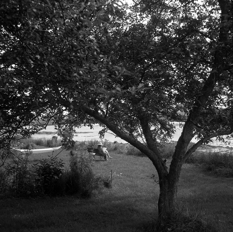 Heather's Backyard