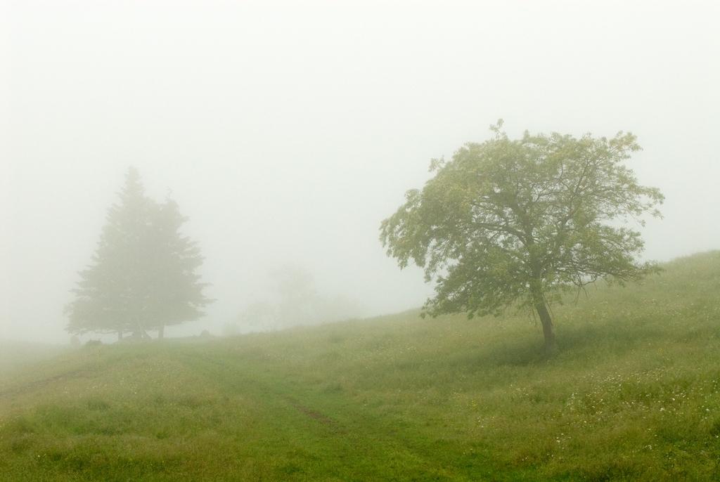 _DSC0127 trees in ocean mist .jpg