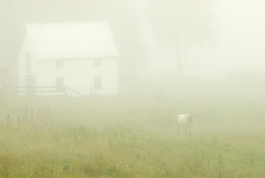 PS216  horse in mist, .jpg