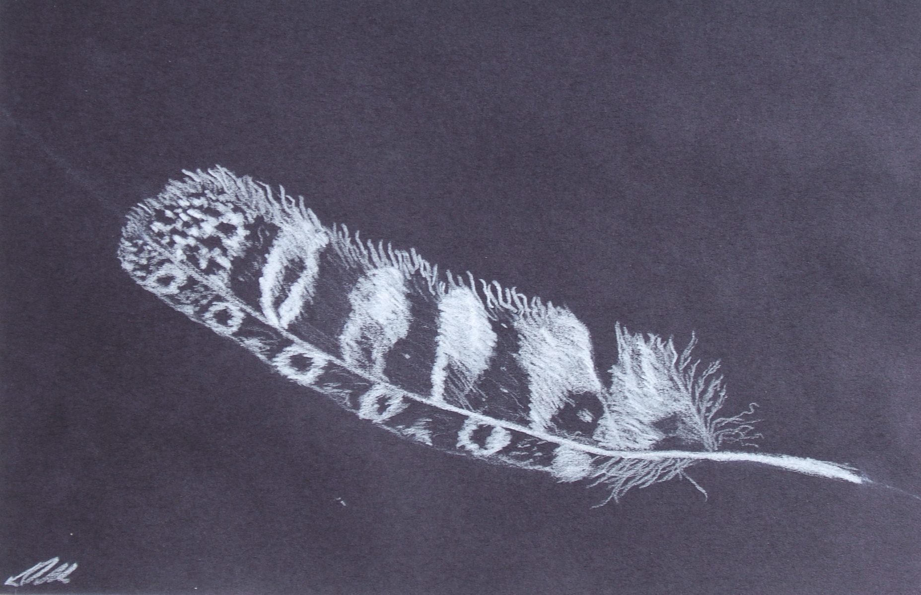 Laura Nelson sketch with white pencil on black from 2013 Ghost Ranch class