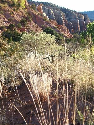Grasses and mesa Photo credit: Elizabeth Buckley  ©2015