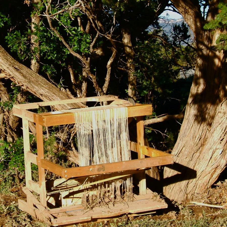 Rio Grande loom upended in cedar tree photo credit: Elizabeth J. Buckley